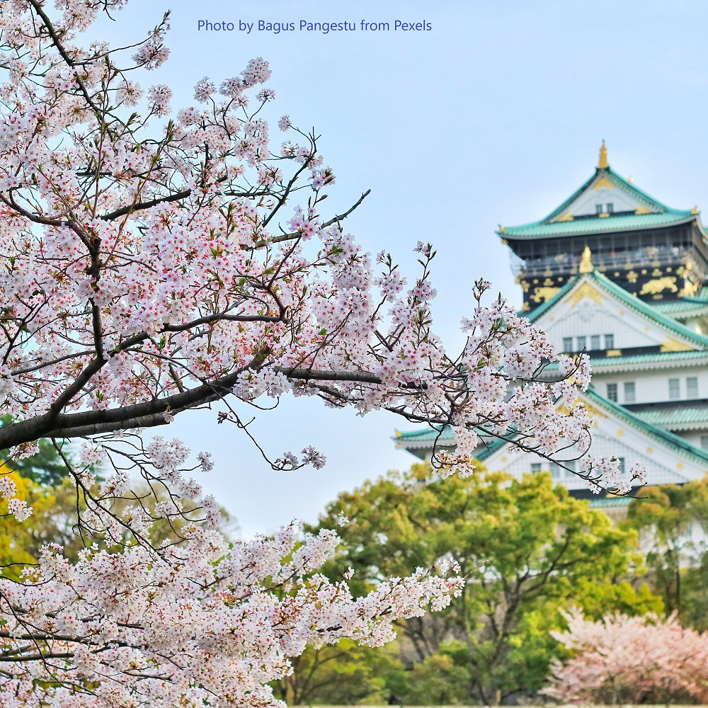 image for NTT aims for  carbon neutrality by 2040